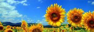 真夏のイメージ